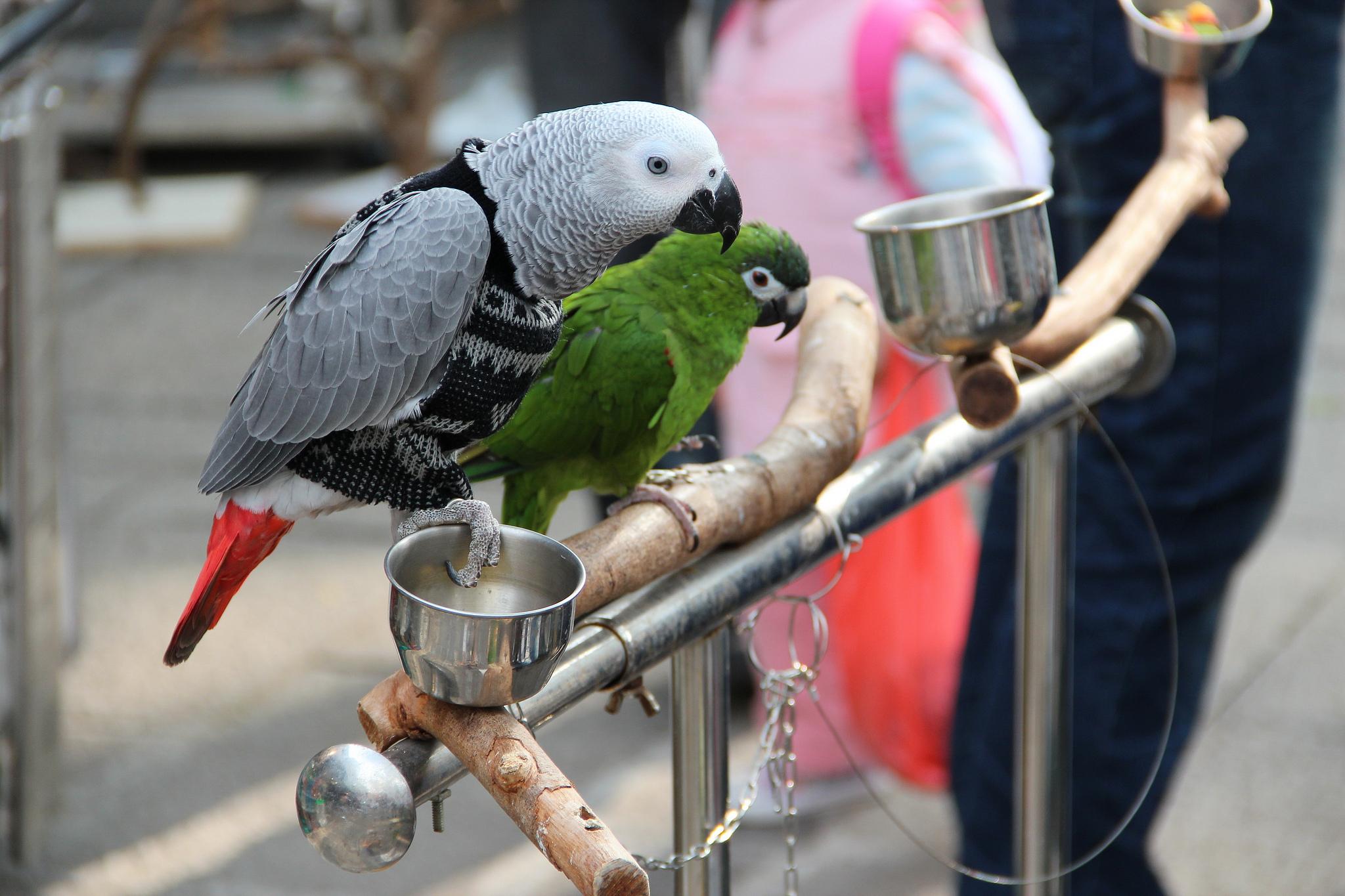 Yuen Po Bird Market - Pietro Ferreira Flickr
