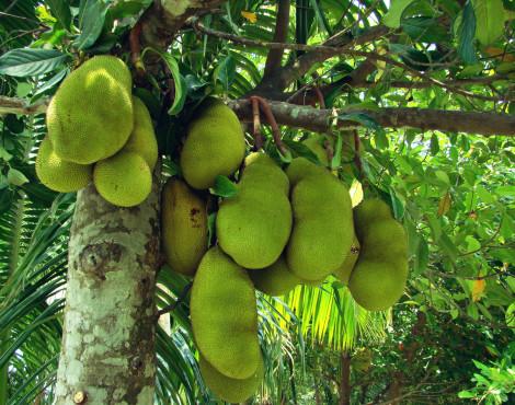 6 Weird and Wonderful Wet Market Fruits