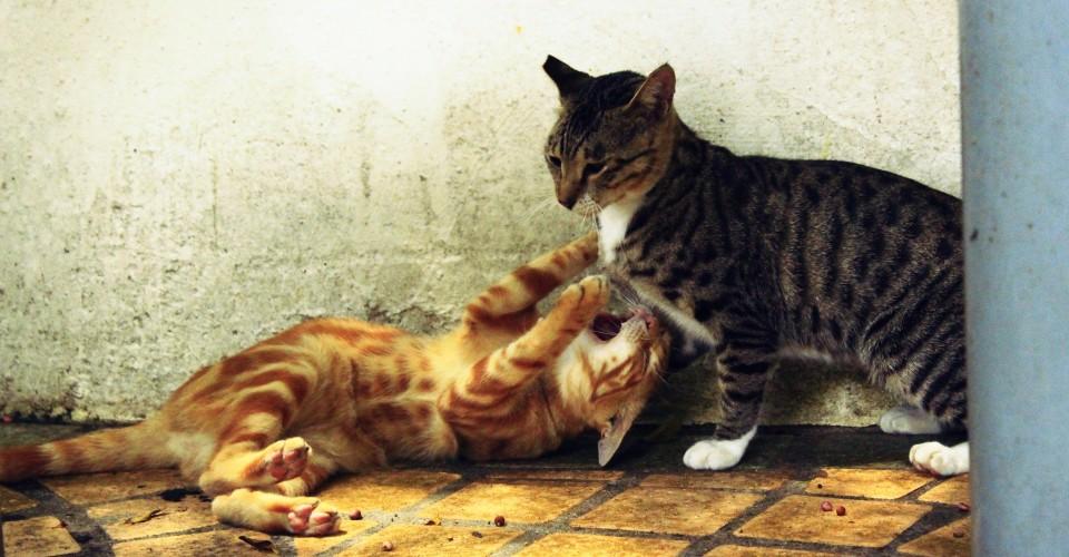 Kittens hong Kong Photo: KaguraYanki/Flickr