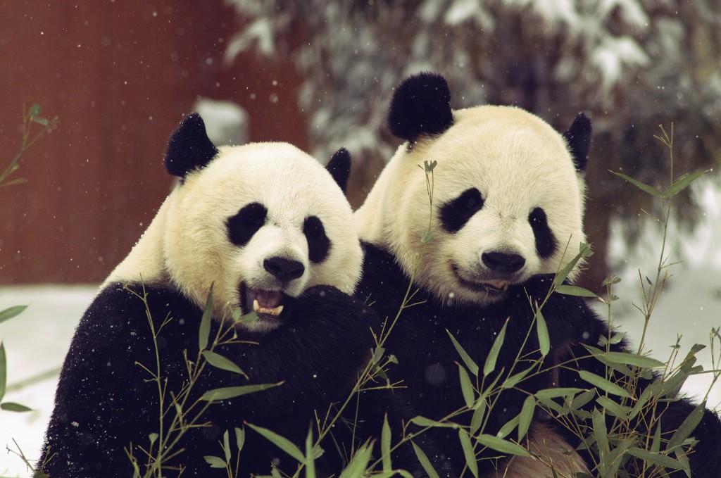 Photo Credit: Ann Batdorf, Smithsonian's National Zoo