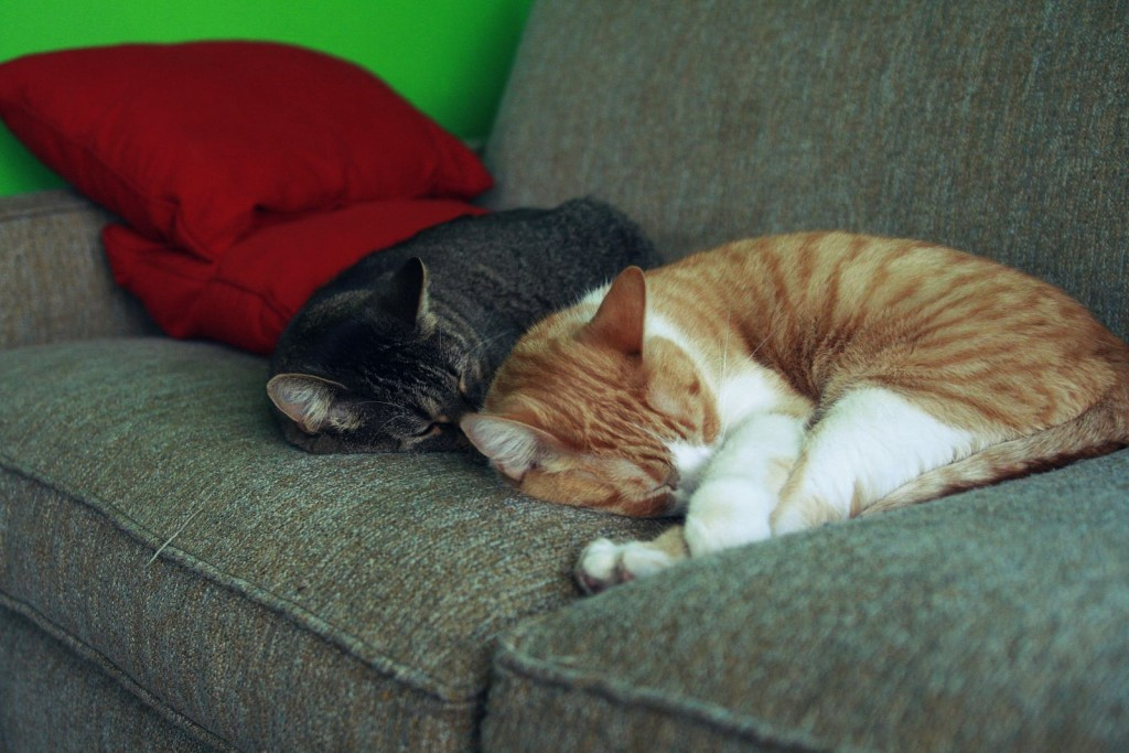Snuggling cats Photo: Sharyn morrow/Flickr via Creative Commons 2.0