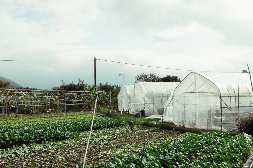 Hong Kong Homies - Wong Yu-ming - Au Law Organic Farm. Photo: Alan Pang/The Loop