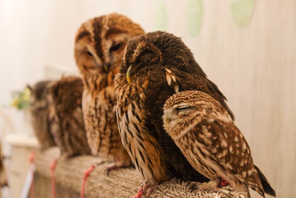 Tokyo, Akiba Owls Cafe. Photo: Megan Hills