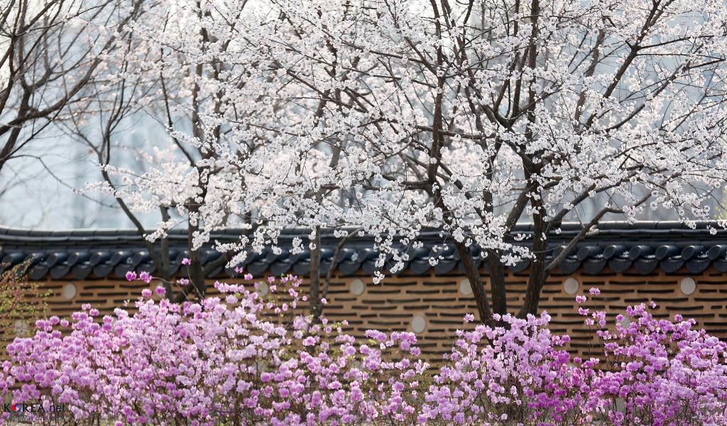 Photo: Republic of Korea/Flickr CC