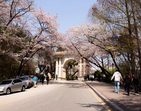 Loop into Seoul