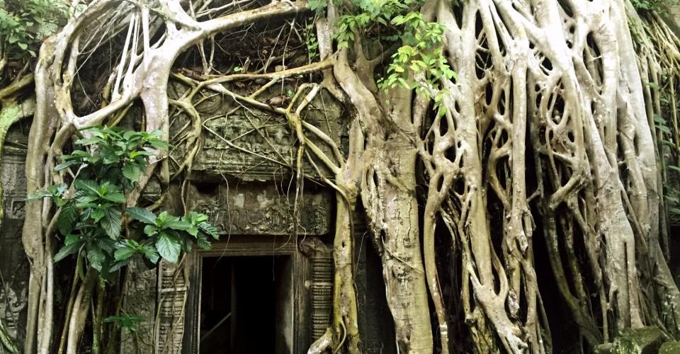 Siem Reap, Ta Prohm