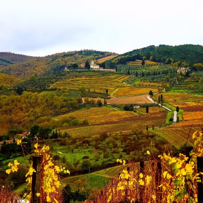 Drink in the Wine Culture of Tuscany