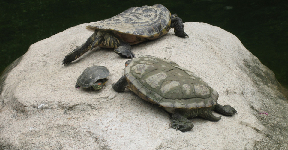Turtles at Hollywood Park. Photo: Jon Parise/Flickr CC