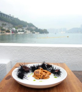 Yin Yang Coastal