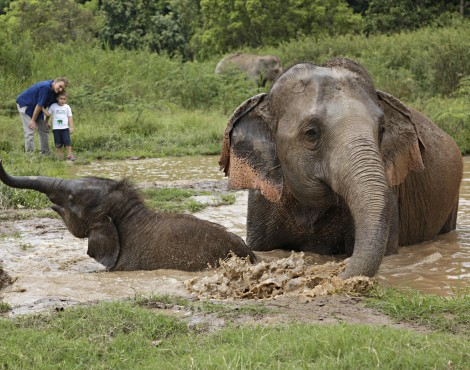 What You Should Know about Elephants in Thailand
