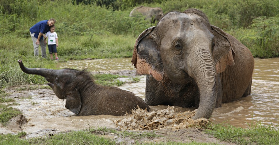 Golden Triangle Asian Elephant Foundation