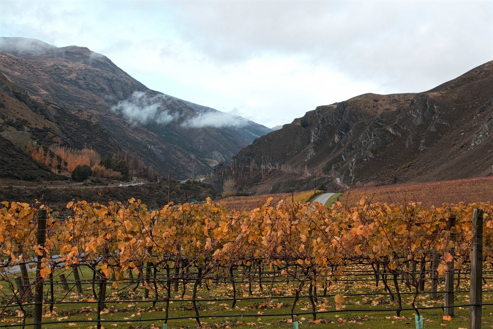 Chard Farm is one of the many wineries in Central Otago that you can visit on popular Queenstown day trips. Photo: Gayatri Bhaumik
