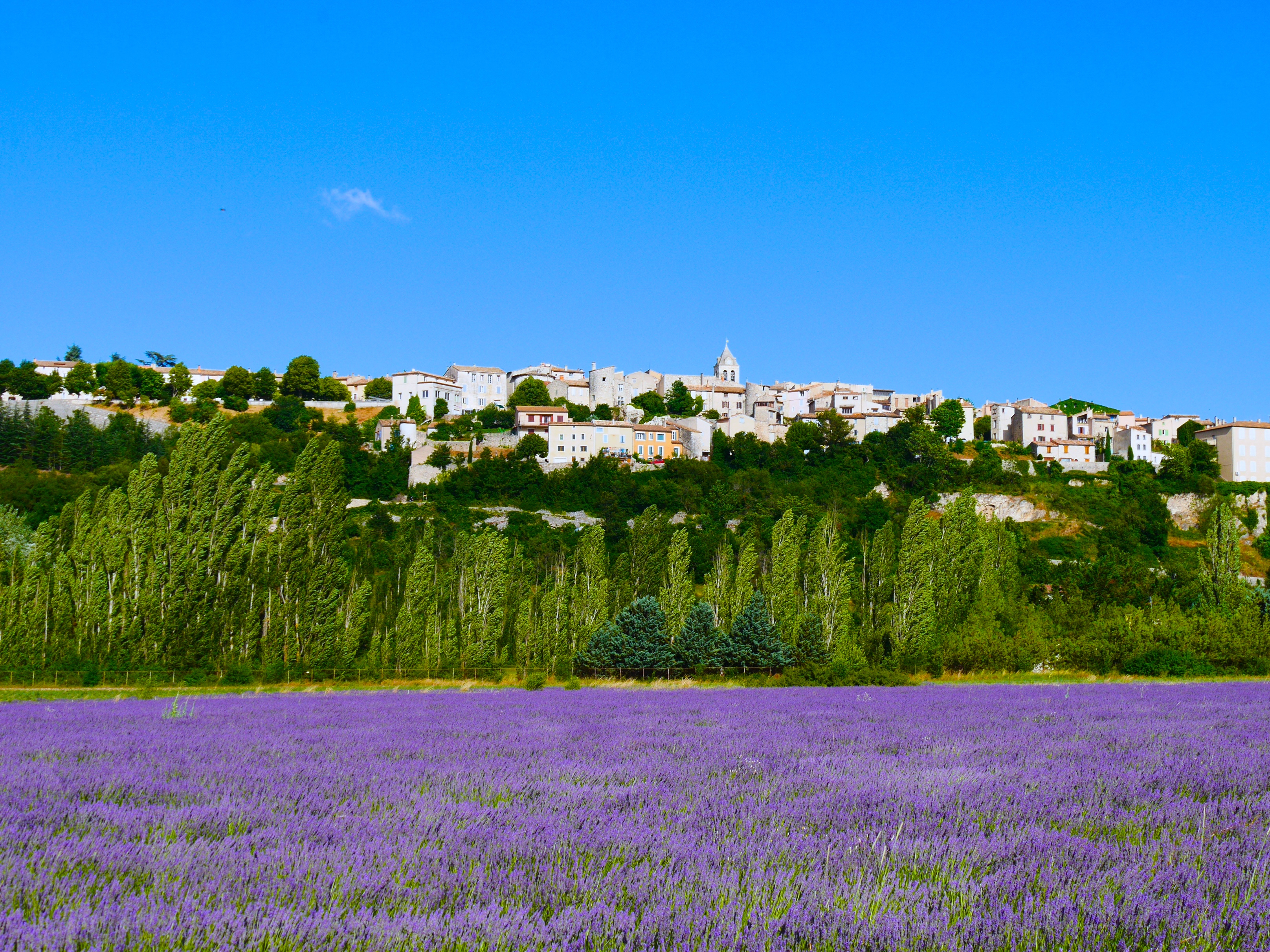 Picturesque field of lavender and village