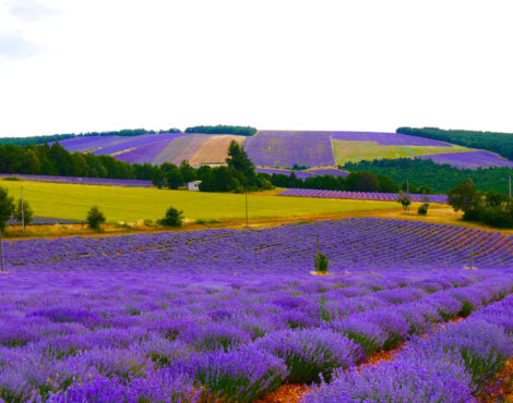 Provence for All Five Senses