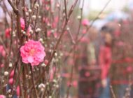 Chinese New Year Flower Markets Jan 22-28