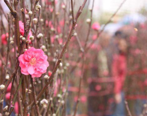 Chinese New Year Flower Markets Jan 22-28