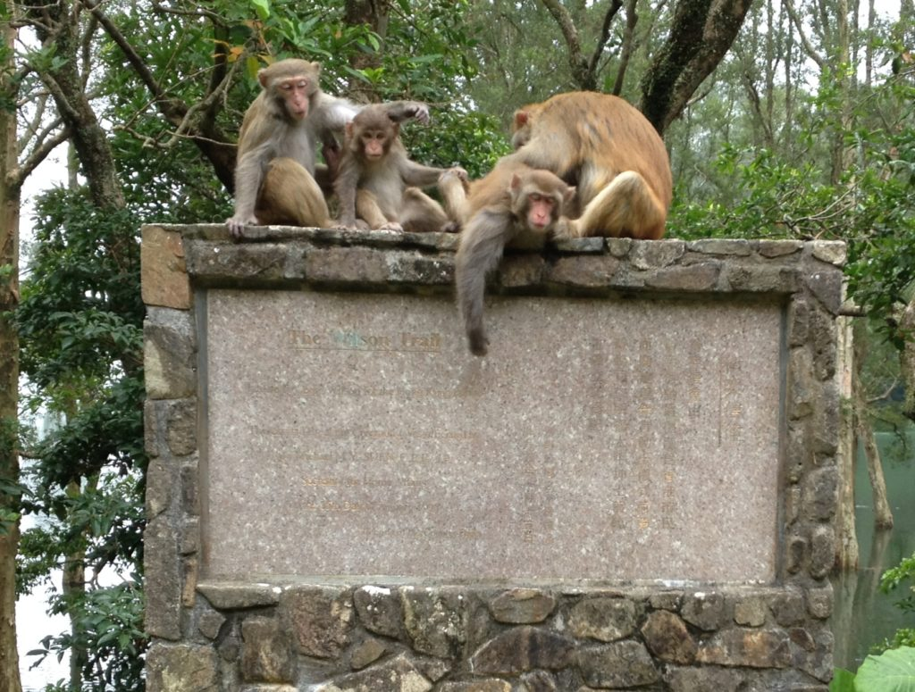Monkey Family on a Wilson Trail Monument by PeterAndrewL