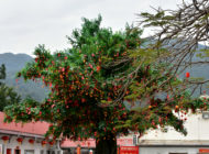Lam Tsuen Wishing Trees: a living shrine