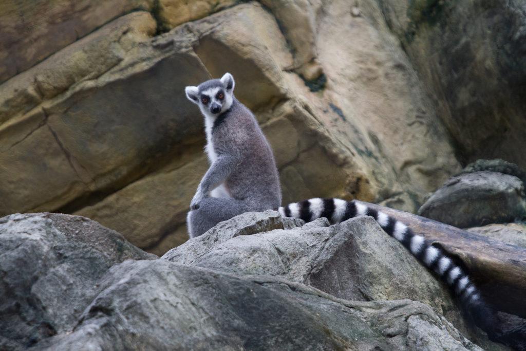 Hong Kong Zoological and Botanical Gardens wildlife in Hong Kong