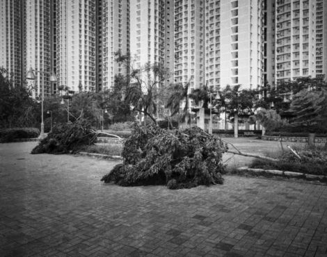 To See The Forest And The Trees at Asia Society: July 6-September 8
