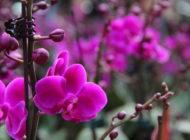 Hong Kong Flower Markets 2020: January 19-25