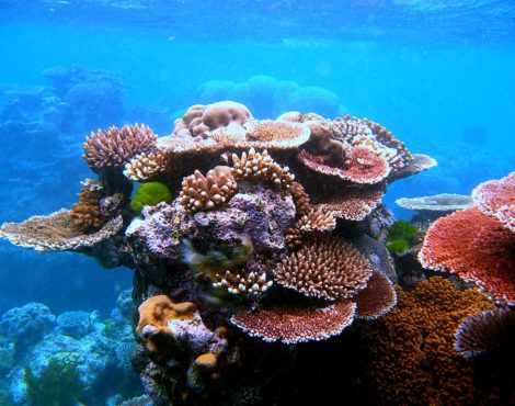 David Attenborough's Barrier Reef: Free Virtual Tour Of The Great Barrier Reef