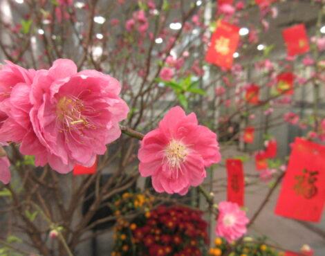 为什么中国家庭在农历新年塑造素食?
