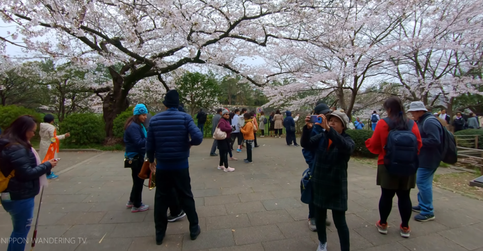 Nippon Wandering电视(2)