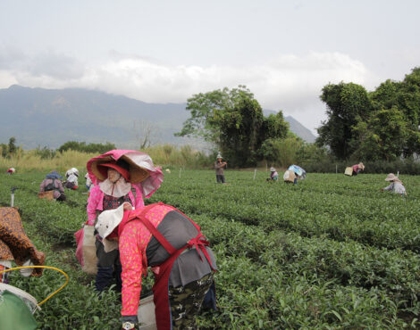 Celebrating Women-Led Tea Farms for International Women's Day 2021