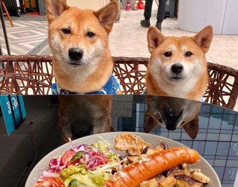 最好的狗友好的餐厅拿你的狗