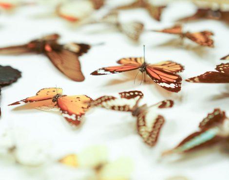 香港的第一个生物多样性博物馆主持城市最大的标本系列