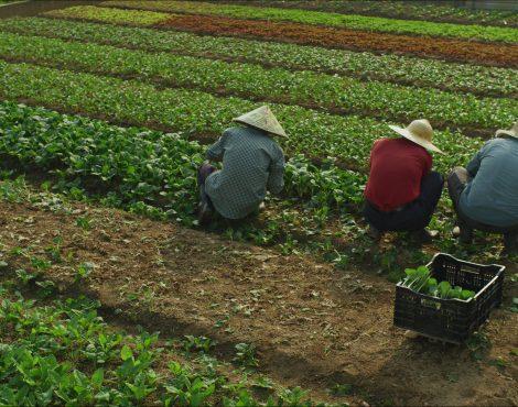 Zero Foodprint Asia Launches